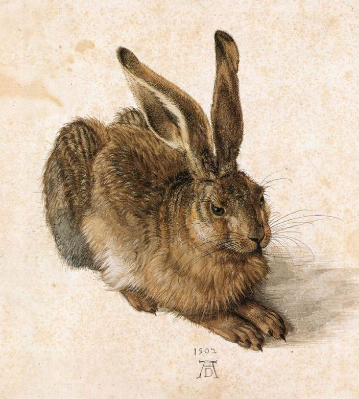 800px-Albrecht_Dürer_-_Young_Hare_-_WGA07362