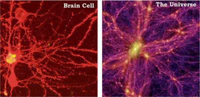 braincellgalaxy